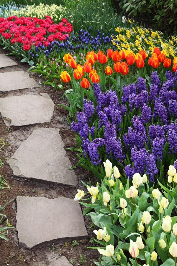 Prato camminamento bordato da fiori