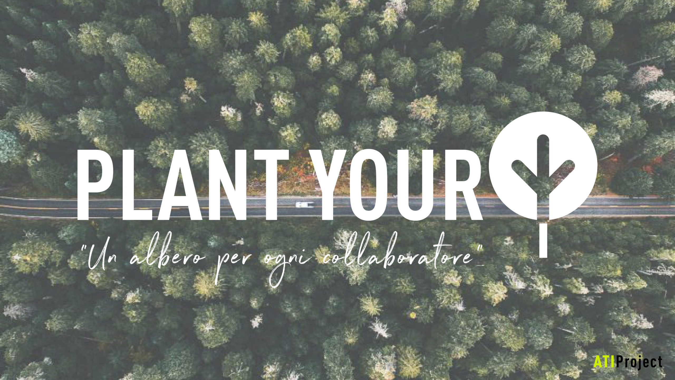 Plan your tree